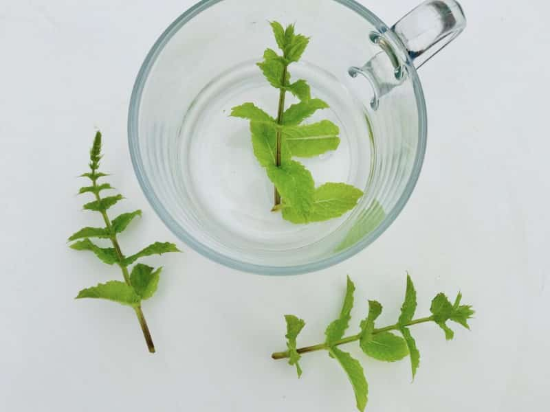 peppermint tea and leaves