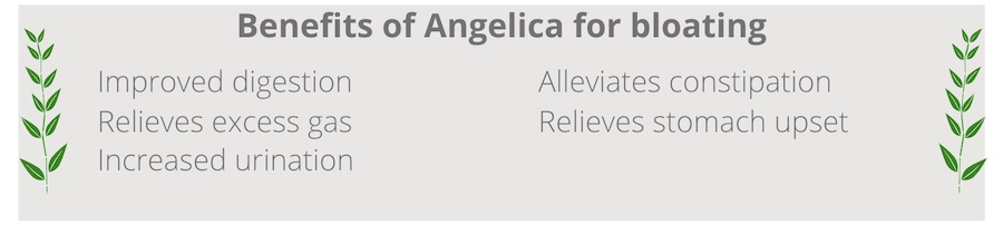 list of benefits of angelica for bloating